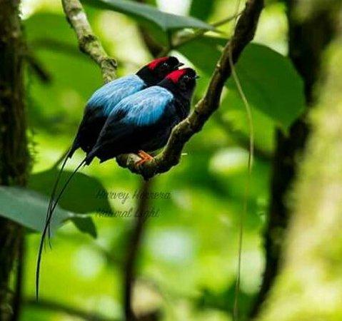 Karen Mogensen Nature Reserve照片
