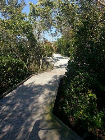 Joan M. Durante Community Park: Walk thru the Mangroves