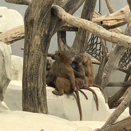 Foto de Parc Zoologique de Paris