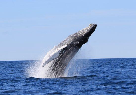 Bonavista, Canada: Whale Breech