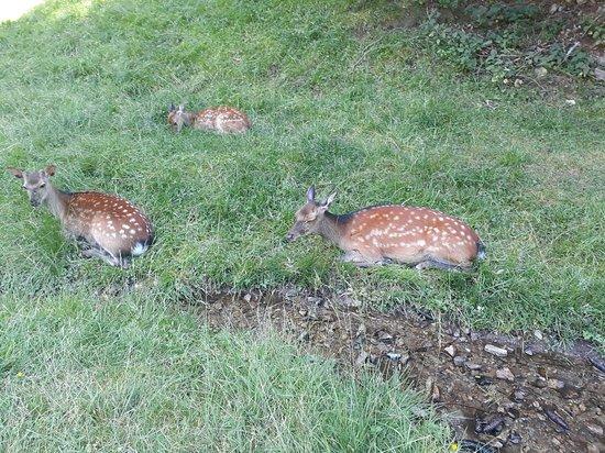 Parc de Merlet: repos de la maman et de ses petits
