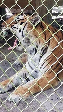 Lions, Tigers & Bears: 20180628_105539_large.jpg