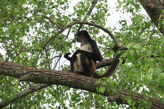 Bioparque Estrella: Monkeys