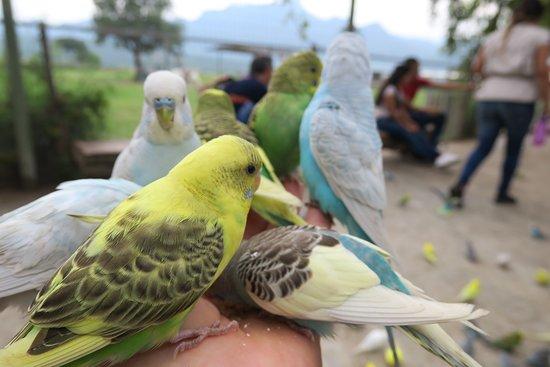 Bioparque Estrella: Feeding the parakeets