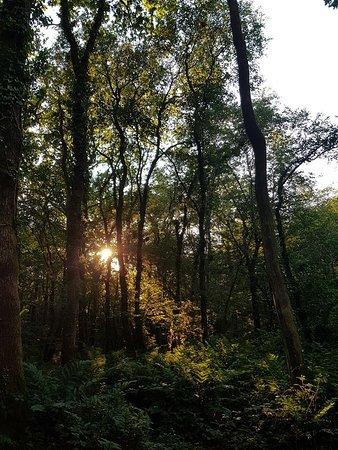 Beaworthy, UK: Sun setting
