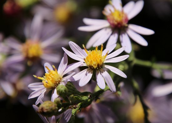 Waynesboro, Pensilvania: one species of the many wildflowers throughout the park