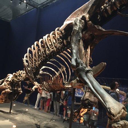 自然历史博物馆照片