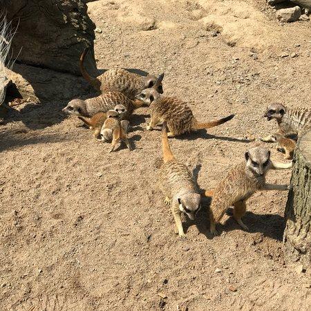 Northumberland Country Zoo: photo1.jpg