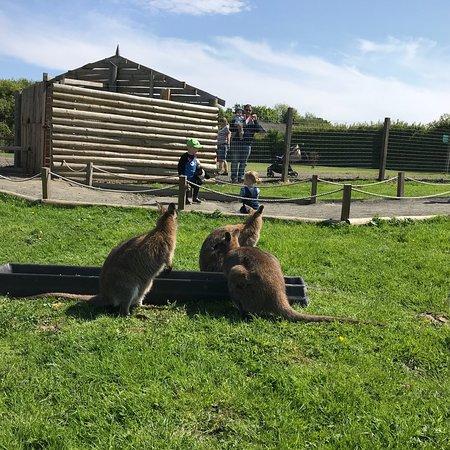 Northumberland Country Zoo: photo4.jpg