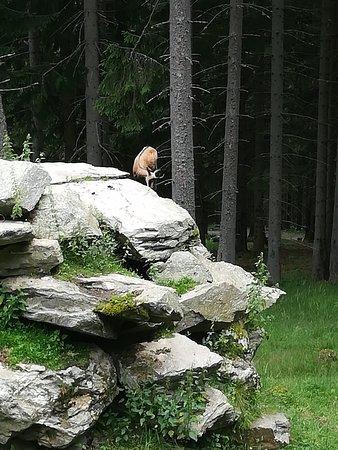 Der wilde Berg Foto