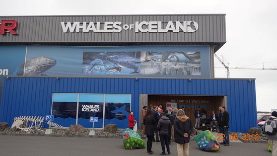 Whales of Iceland: The entrance