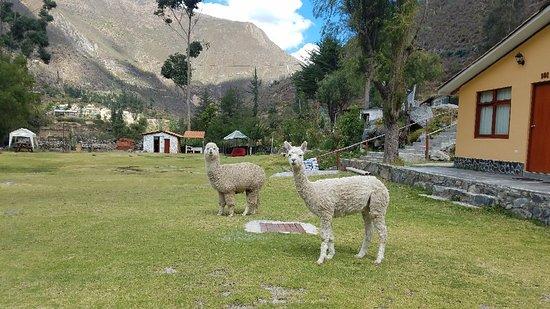 Huancaya, Peru: 20180709_124945_large.jpg