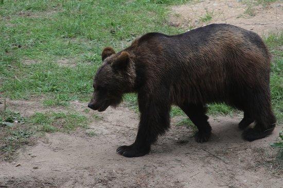 Rosengarten, Tyskland: beren goed tezien vanaf de fotopunten zonder gaas of glas