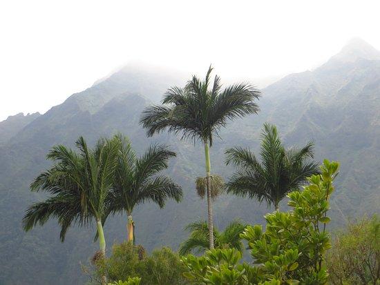 Hoomaluhia Botanical Gardens: More Trees