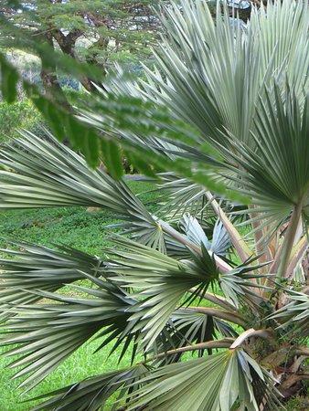 Hoomaluhia Botanical Gardens: Plant