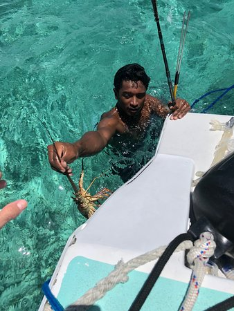 Creative Tours Belize: One of our guides catching lobster