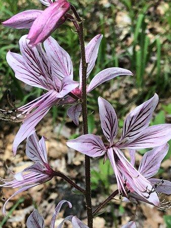 Perchtoldsdorf, Austria: Wonderful flora