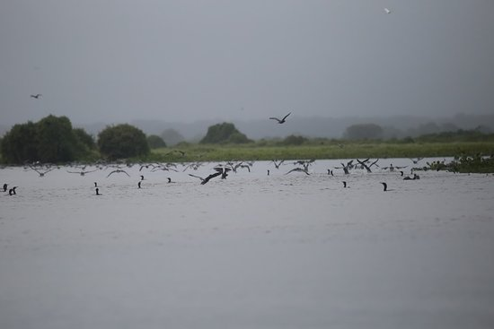 Rio Cuiabá照片