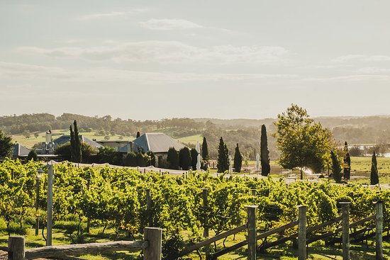 Ulladulla, Australia: Cupitts Vineyards