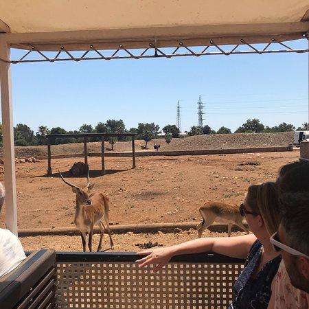 Safari Zoo: photo5.jpg