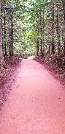 Giant Cedars Boardwalk Trail: 20180702_211952_large.jpg