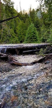 Giant Cedars Boardwalk Trail: 20180702_211942_large.jpg