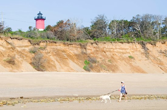 Nauset Light Beach is dog friendly. Just set up outside the small lifeguard-protected area.