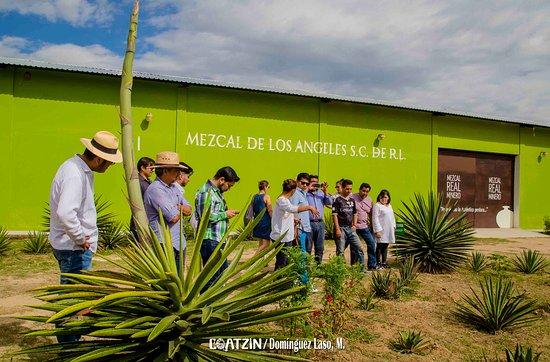 Recorrido por las instalaciones de Mezcal Real Minero gracias a la maestra Mezcalera Graciela