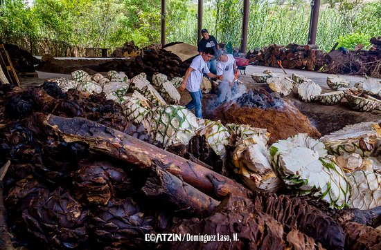 Mezcal Real Minero: Parte de la preparación para la cocción de diferentes agaves, tanto cultivados como silvestres