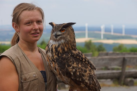 Fockelberg, Jerman: Several species of owls were brought out to interact with the spectators.