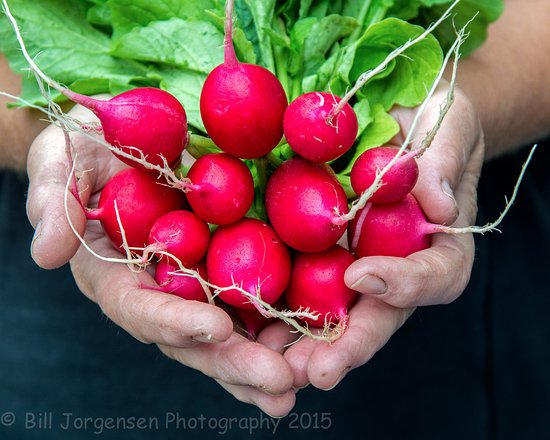 Gladstone Brewing Company: Lovely radishes
