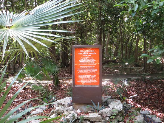Jardín botánico Dr. Alfredo Barrera Marín: Welcome everyone!