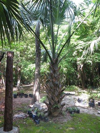 Jardín botánico Dr. Alfredo Barrera Marín: Such a cool tree, wish I knew the name . . .