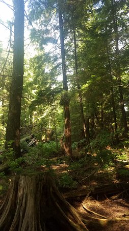 Totem Bight State Historical Park: Beautiful forest setting