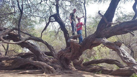 Ferrenafe, بيرو: Bosques de Pómac el Jardín del señor de Sicán