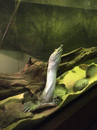 加拿大里普利水族馆照片