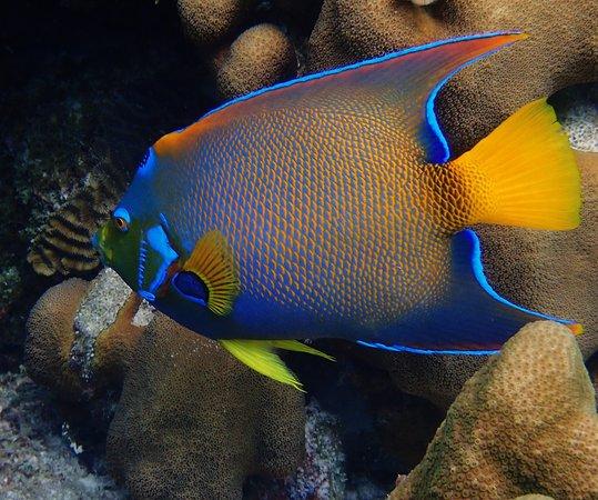 Dive Friends Bonaire照片