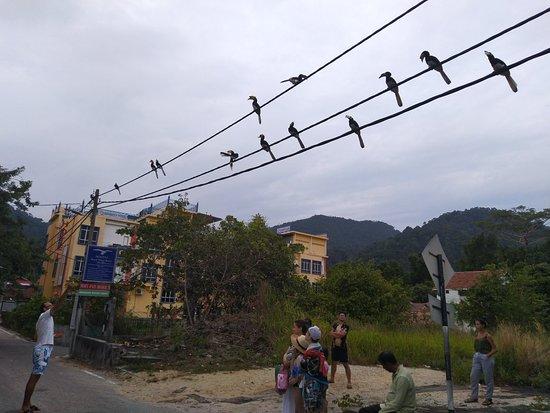 Pangkor, Malaysia: IMG_20180709_185834_large.jpg