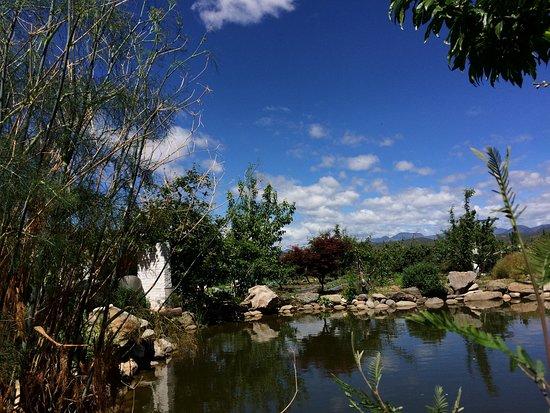 边居酒店: 果园中的池塘