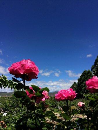 边居酒店: 果园中的蔷薇