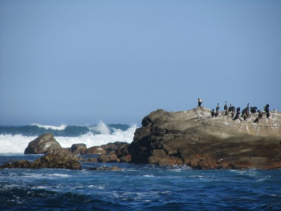 Port St Francis, Sudáfrica: Sharks Point we saw seals sunning themselves