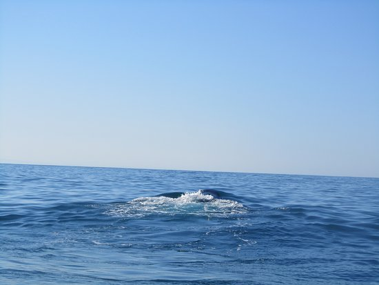 Port St Francis, Sudáfrica: We saw about 4 whales