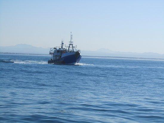Port St Francis, Sudáfrica: Chokka boat
