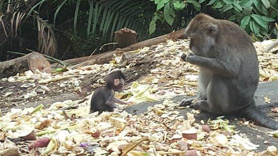 Sacred Monkey Forest Sanctuary Foto