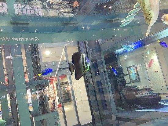 Aeon Mall Okinawa Rycom: Encore une photo de l'aquarium, il est petit mais la selection de poissons est correcte