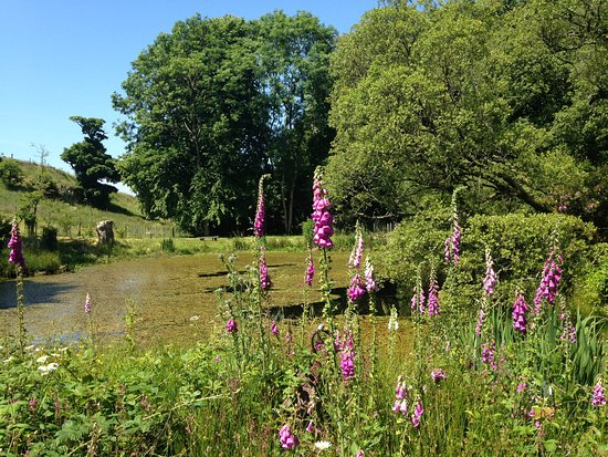 Cosses Country House: The beautiful pond