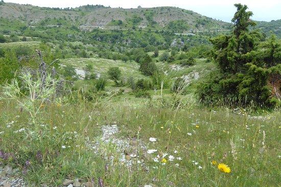 Epirus, Greece: Wild flower meadows on plateau