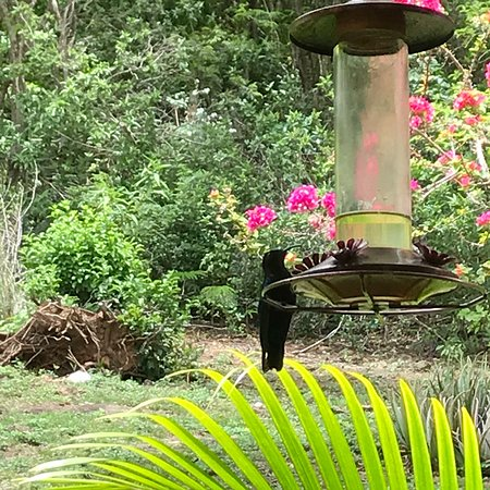 Au Jardin des Colibris Ecolodge&Spa照片