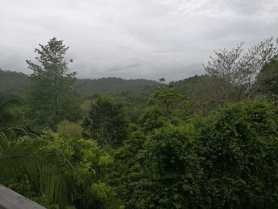 Ian Anderson's Caves Branch Jungle Lodge: The view from the lower balcony, we had another one with a hot tub higher up