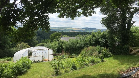 Forest Garden Wales: View across the polytunnel and valley from the top corner of the forest garden